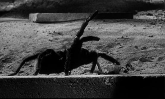 Spinnenfilm